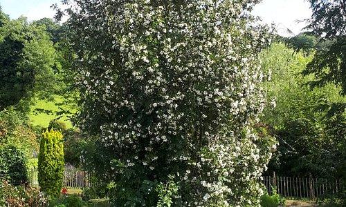 Dunmore gardens