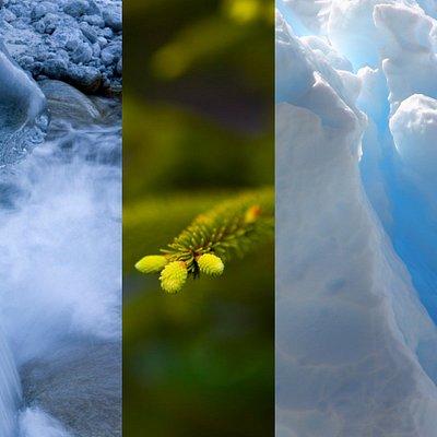 Aquaflorès la science de l'eau et des plantes