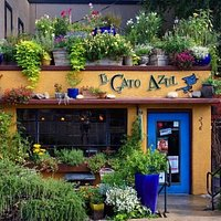 August at Gato