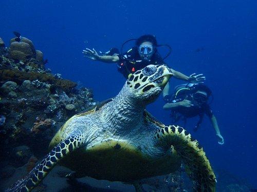 Woww big sea turtle