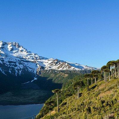 vista desde sendero-tour tolhuaca milenario