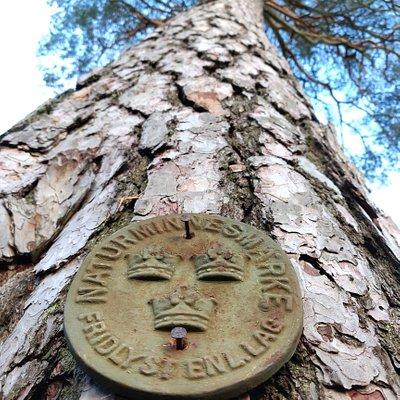 Morrarötallen är en av Sörmlands grövsta tallar med sina 3.93 m i omkrets. Den är mer än 300 år gammal och blev fridlyst 1956.