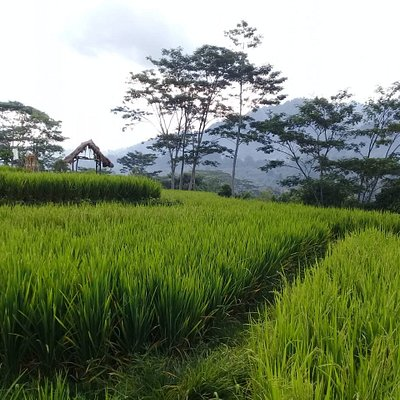 Rice Terace Trekking - Sidemen