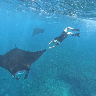 Snorkeling trip to manta bay, gamat bay and crystal bay