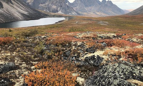 Talus Lake with dwarf birch and sponge lichen in the foreground and Tombstone Mountain in the back.