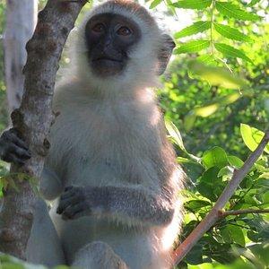 All about Zanzibar kilosas conservation