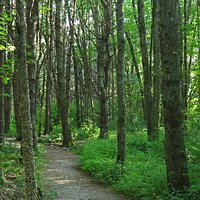 This ADA-accessible loop trail is in the Fels-Grove Farm Preserve in Yarmouth, Maine.
