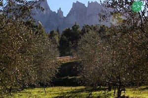 Alrededor de la población de Marganell existe una bonita ruta senderista donde podemos disfrutar de unas preciosas vistas a Montserrat y veremos varías ermitas románicas. Muy fácil, idea para hacer en familia.