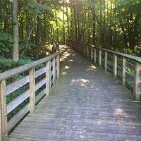 Boardwalk thru the woods.