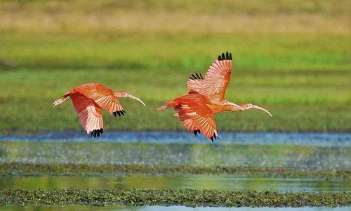 Con más de 265 especia de aves registradas, somos un destino ideal para el avistamiento de aves.