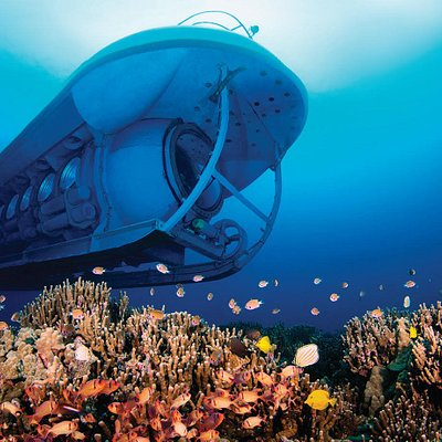 Atlantis Submarines Kona • • • #atlantishawaii #hawaii #kona #hawaiiisland #bigisland #undersea #adventure #dive #submarine #bestthingstodoinkona #konaforkids #familyactivities #activitiesinkona #familyactivitieskona