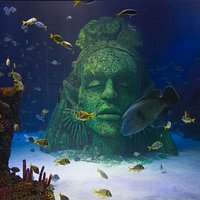 Visit our amazing Ocean Tank