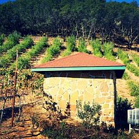 Picture of the well house with a wine barrel and grape vines and olive trees in the background. So many places to explore in Little Kurdistan of M.S. Torun Winery.