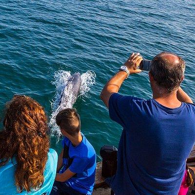 Παρατήρηση δελφινιών που παίζουν με το σκάφος