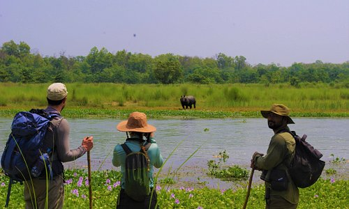 This photo taken during Chitwan safari by jungle trek in Chitwan National Park, NEPAL. Jungle walk is not only safari is Adventures experience that take you closer to  the wild Animal with out disturbance.