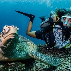 Turtle pic!