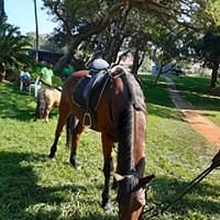 Horse and pony rides at the market