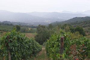 Irpinia vineyards