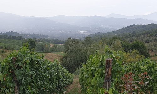 Irpinia vineyards