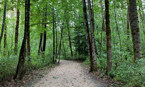 the path to the river
