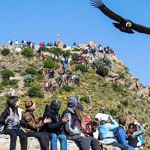 El Cañón del Colca es uno de los más profundos del mundo y un popular destino para hacer senderismo. Se encuentra en el sur de Perú, junto al río Colca, famoso entre los amantes del rafting. En este valle habita el enorme cóndor andino