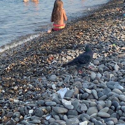 галька на пляже и голубь