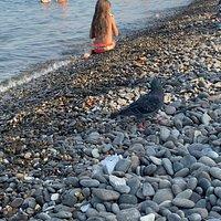 голубь на пляже