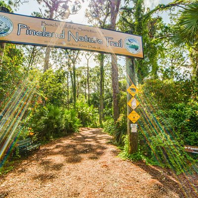 Our Pineland Nature Trail!