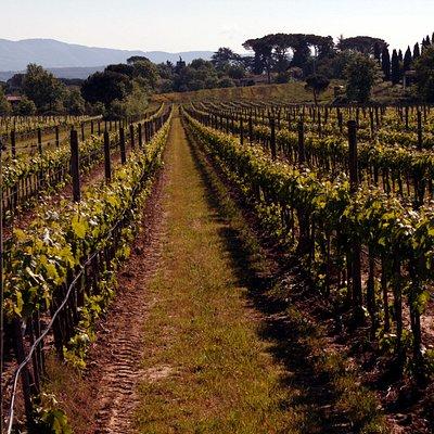 Una foto delle nostre vigne