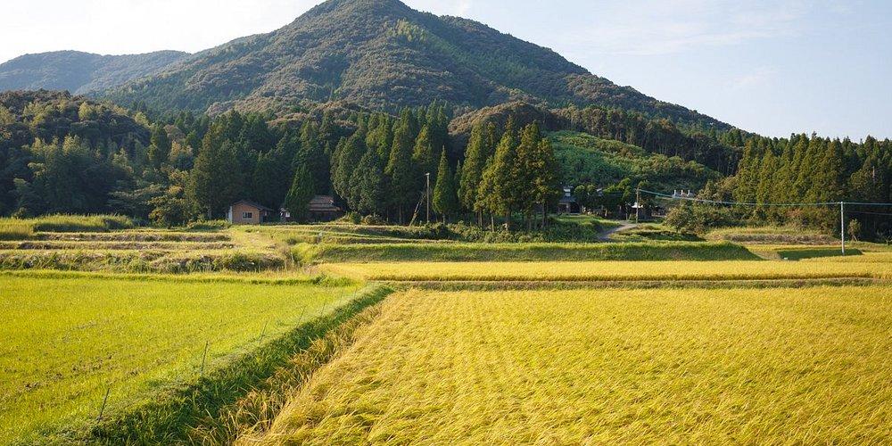 Miyachidake(Mountain)