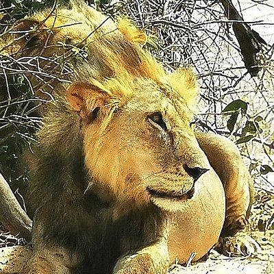 Safari Karibuni con derick frigorifero