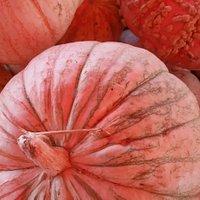Arizona Best Pumpkin PATCH
