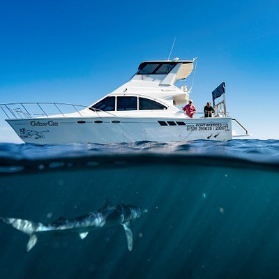 Blue shark snorkelling trips available!