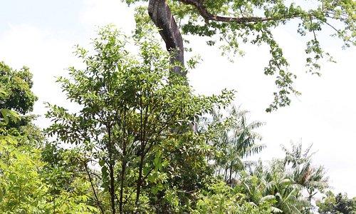 Acaminhada maravilhosa na Ilha de Santana no Estado do Amapá. Contato intenso com a fauna e flora amazônica me surpreende sempre. Dessa vez foi mais especial ainda.