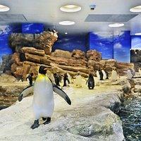 ペンギン村亜南極ゾーンの様子です。正面にいるのはキングペンギンです。