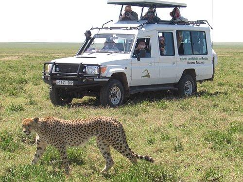 Cheetah X Natures Land