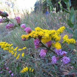 Trail section of prairie garden