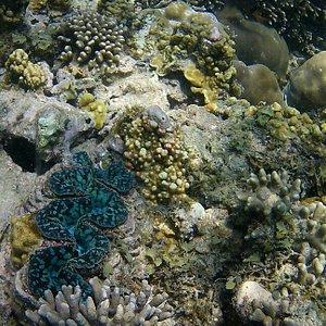 Amazing underwater wildlife!