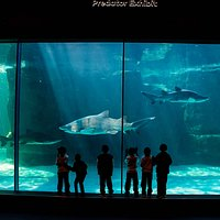 Predator Exhibit, Two Oceans Aquarium