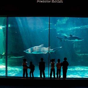 Predator Exhibit, Two Oceans Aquarium