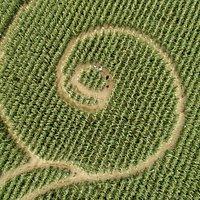 Labirinto nel mais 2019: i 2200 anni dalla fondazione di Aquileia. I mosaici della basilica: Giona e il mostro marino e i nodi di Salomone. Foto di Fabio Pappalettera