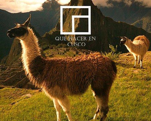 Deseas conocer Machu Picchu y otros atractivos turísticos de la región del Cusco? Tenemos los mejores programas de visitas guiadas  con actividades de aventura o tours tradicionales, que harán una experiencia inolvidable su estadía en la ciudad imperial.