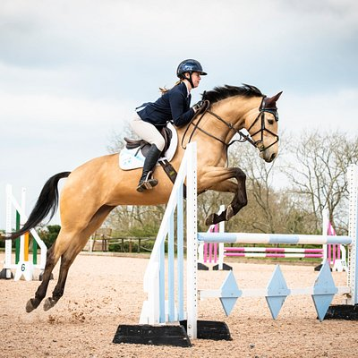 Show Jumping in the Yorkshire Arena