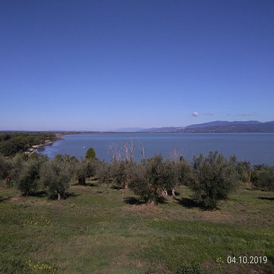 From the Castiglione del Lago's promontory, dotted with olive trees, the view towards the north coast is exciting