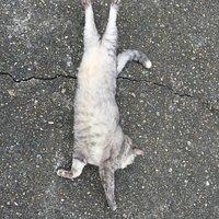 猫のセクシーポーズ