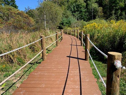 Trail through the wetlands