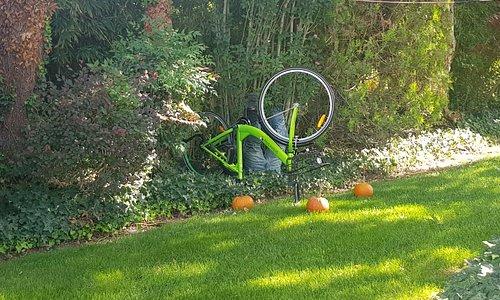 Pumpkin patch, il giardino delle zucche