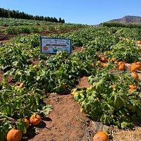 Pumpkin patch. Some are 2$ per pick