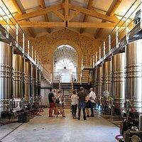 Visite de la cave de vinification