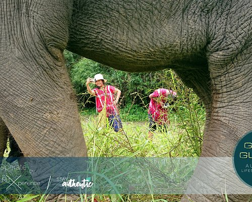 Real Experience with GuideGURU I Authentic Lifestyle Travels : Elephant Village 4 Day 3 Night
